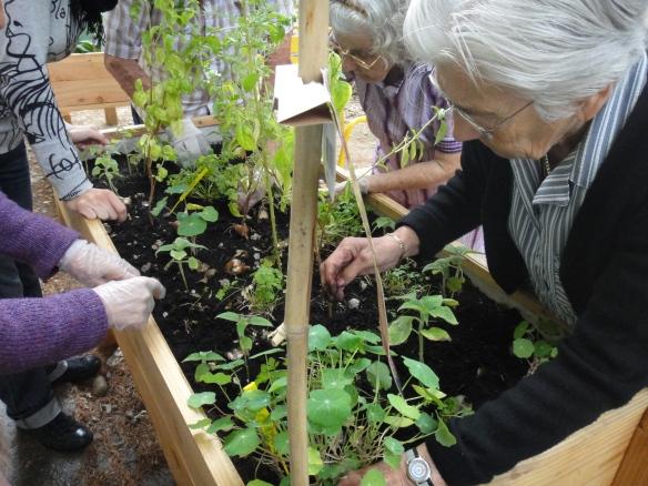 Dans le Jardin de l'espoir au PASA de Valence, on met les mains dans la terre.
