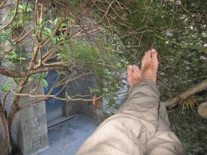 Sébastien est adepte des siestes dans les arbres (ici dans un érable japonais)