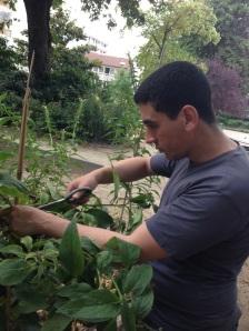 Mounir aimerait travailler dans les espaces verts.