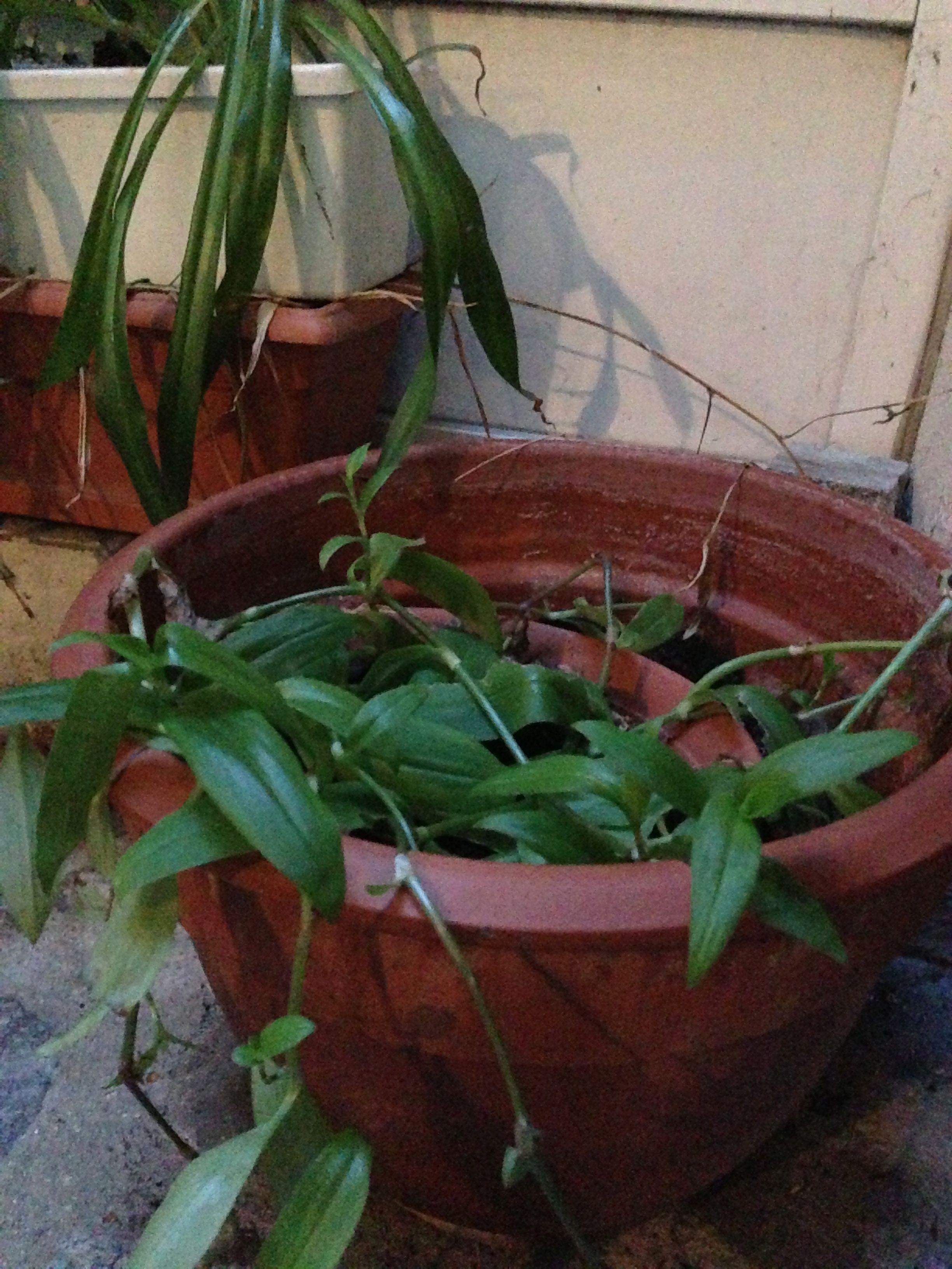 plantes et personnes g es le bonheur est dans le jardin. Black Bedroom Furniture Sets. Home Design Ideas