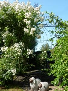 10 Terrasse toscane - Les montons montent la garde (METAL)