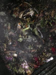 Matière première (déchets de table sauf protéines, fleurs et plantes) : la décomposition en action