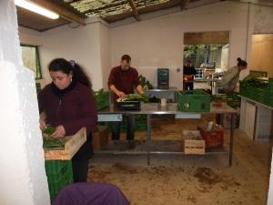 A tour de rôle chaque semaine, les jardiniers sont responsables de la préparation des paniers.