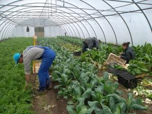 Au départ, les jardiniers ont monté le jardin : serre, irrigation, électricité. Ils continuent à contribuer à l'entretien selon leurs compétences.