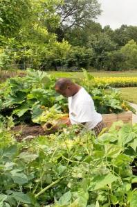 Lentalus inspecte les courgettes.