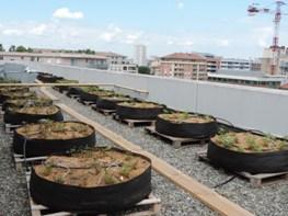 Les jardinières en géotextile accueillent les plantes sur le toit.