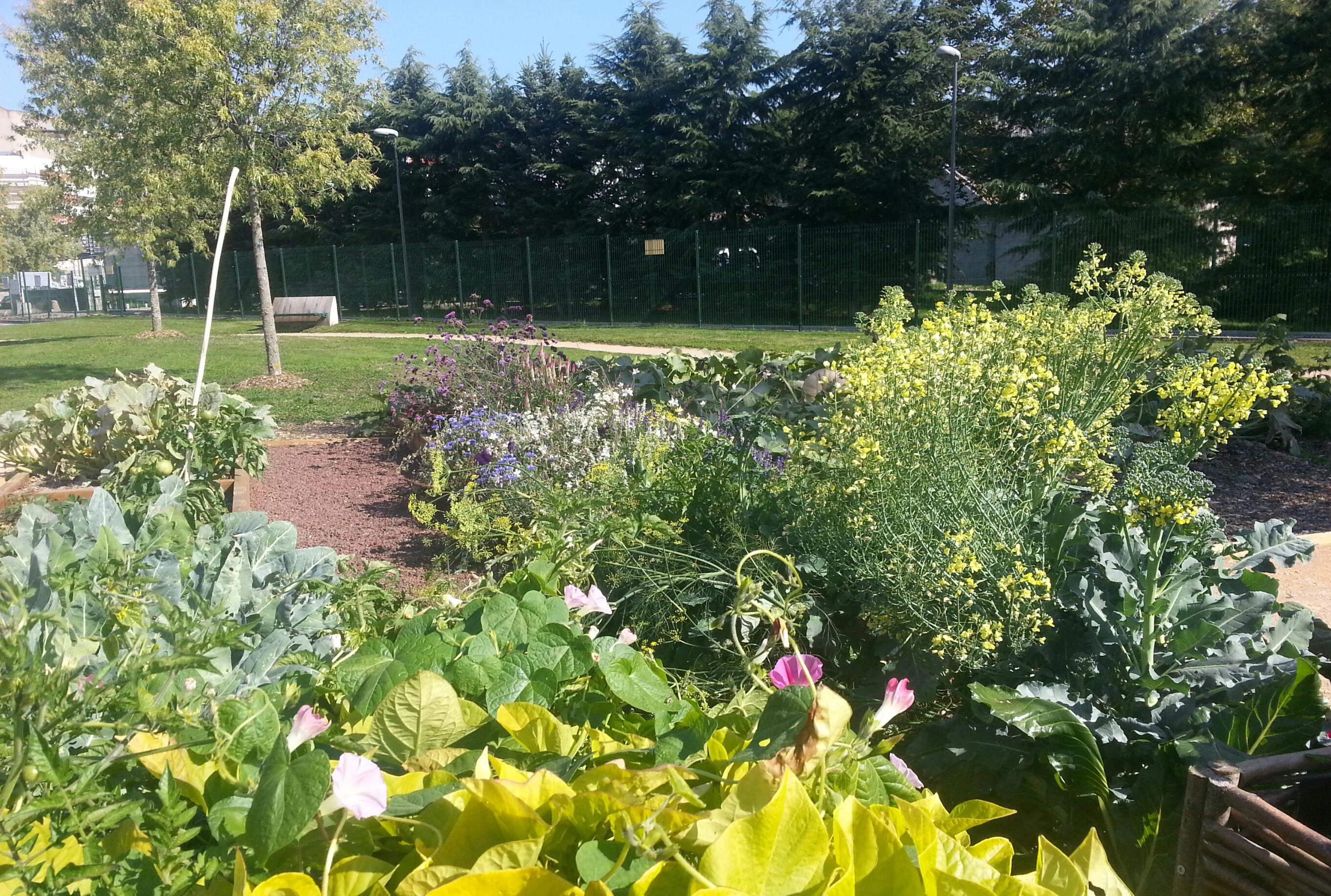 Jardin et famille de patients le bonheur est dans le jardin for Jardin bonheur 2015