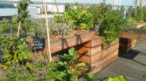 Les bacs, conçus à trois hauteurs pour différents types de chaises roulantes, sont en bois résistant et issu de circuits courts. Le jardin est également équipé de composteurs.