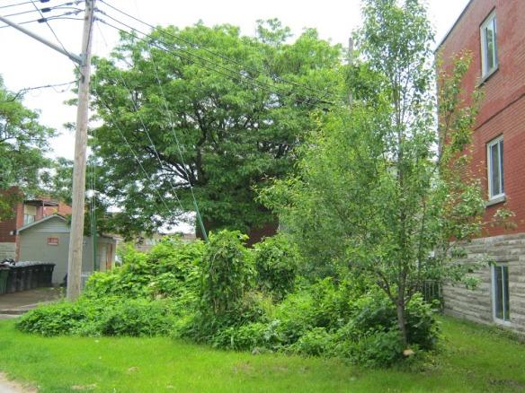 Forêt nourricière dans le quartier Place Benoît