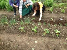 Semis avec Claude Drothière et des jardinières au Parc des Chanteraines