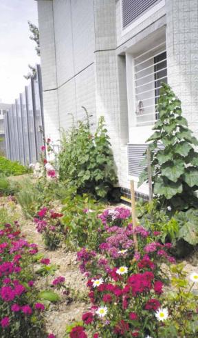Le jardin du Centre de détention de Nantes (source : livre blanc ANVP/Green Link)
