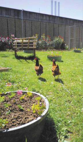 Le jardin et les poules du Centre de détention de Nantes (source : livre blanc ANVP/Green Link)