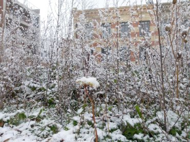 Potager neige